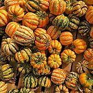 Green, Yellow and Orange Gourds by dsgnguy