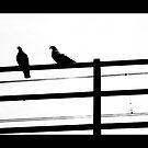 Shy pigeons by MelaB