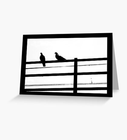 Shy pigeons Greeting Card