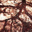 African Shadow Tree 3 by Menega  Sabidussi