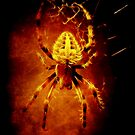 Spider by Christine Elise McCarthy