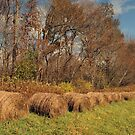 Bales Of Hay by gailrush