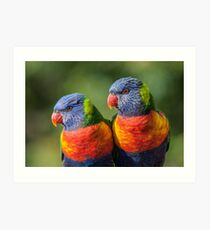 Rainbow Lorikeets Art Print