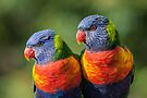 Rainbow Lorikeets by TonySlattery