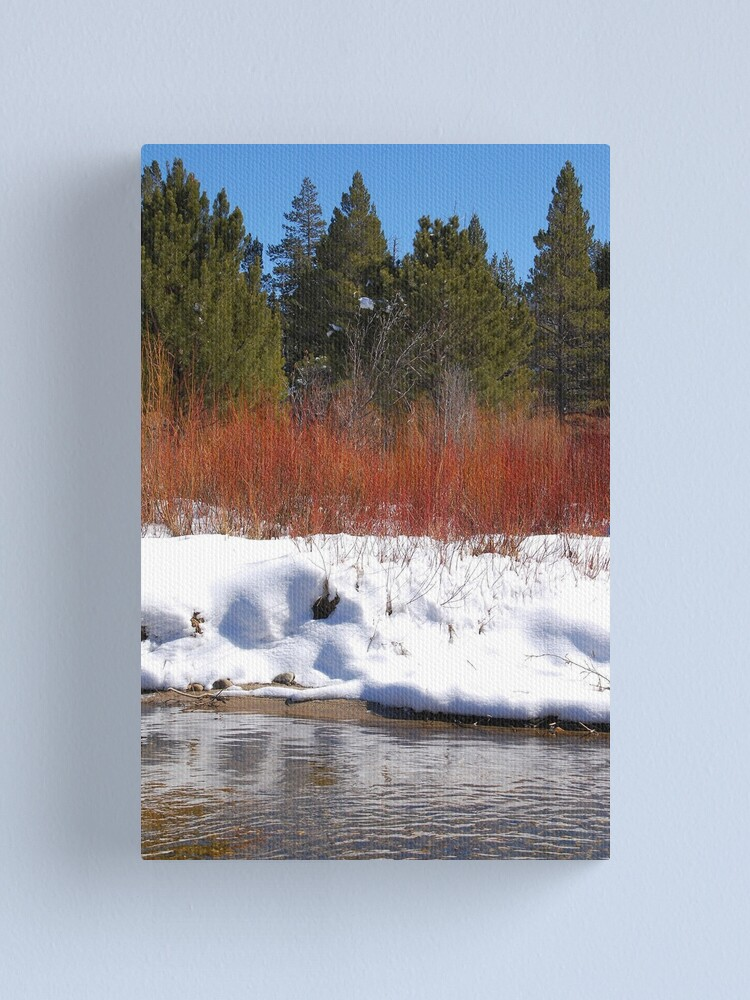 Alternate view of Brilliant Willow Canvas Print