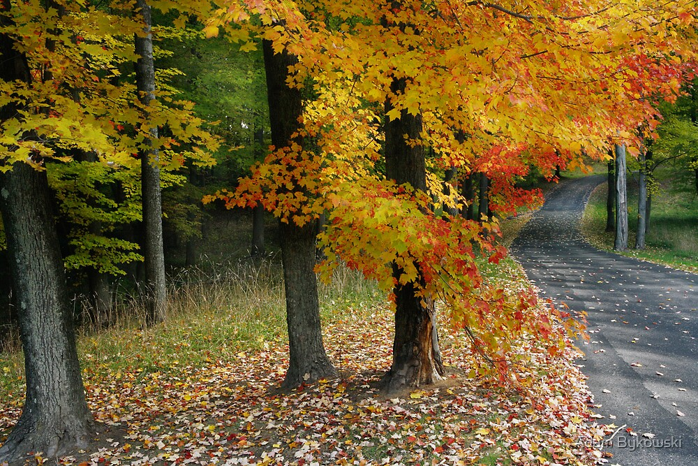 Michigan Road Autumn Colors by Adam Bykowski