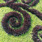 grass, #grass by znamenski