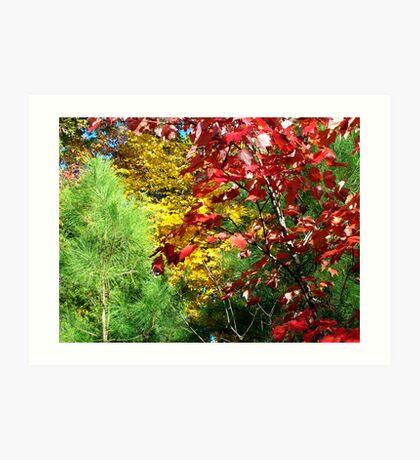 Natural Technicolor Art Print