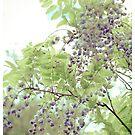 Spring by Nicole  Hastings