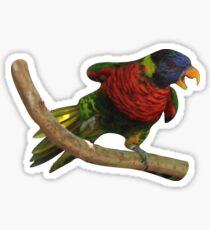 lorikeet Sticker