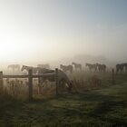Ponies in the mist. by HJCPEI