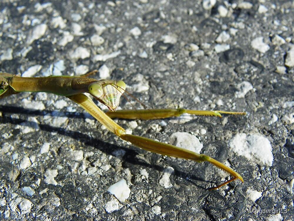 Not so praying mantis.  by spydergirl13
