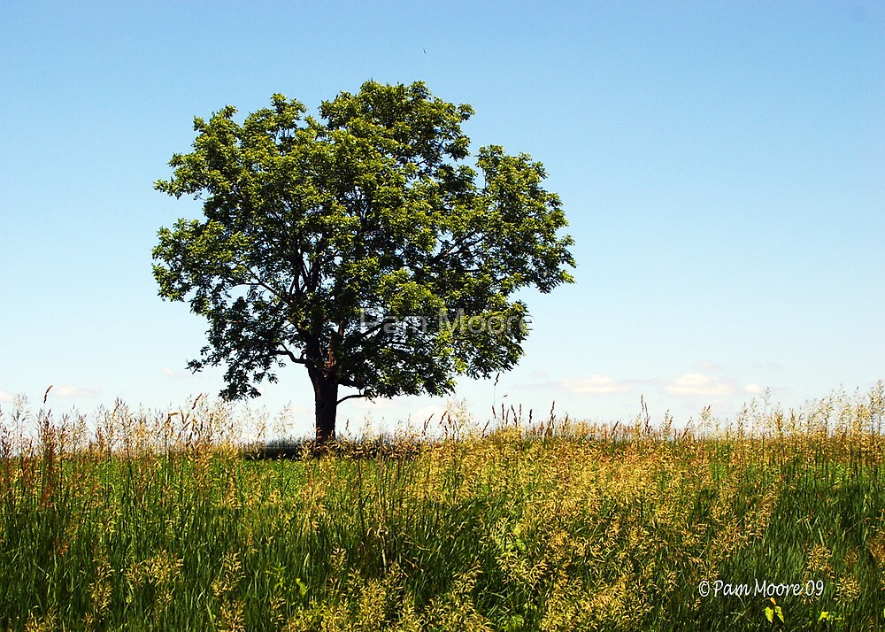 Tree on a Hill by Pam Moore