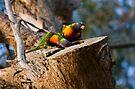 Tending the Nest by Jason Asher