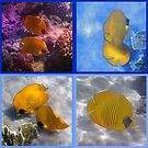 The Red Sea Masked Butterflyfish Sealife Collage by hurmerinta
