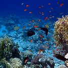 Wonderful And Colorful Red Sea Sealife World by hurmerinta