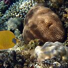 Exciting And Beautiful Red Sea World 2 by hurmerinta