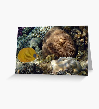 Exciting And Beautiful Red Sea World 2 Greeting Card