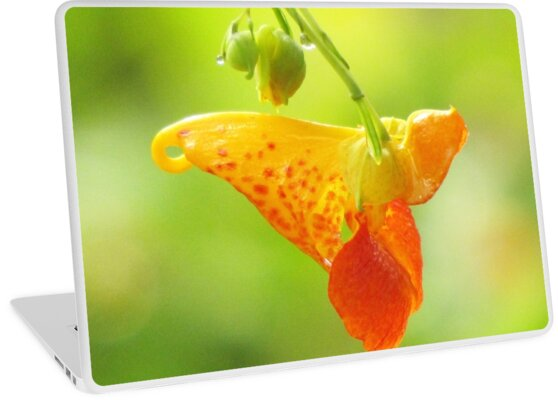 Jewelweed (Impatiens Capensis)  by Jean Gregory  Evans