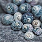 Beach Treasures Snail Shell Collection by artsandsoul