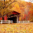 Autumn Stroll by Sandy Woolard