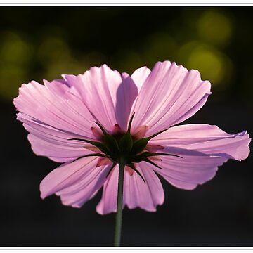 Floral detail by DerekCorner