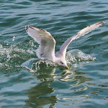 Splashing Gull........Lyme Dorset UK by lynn45