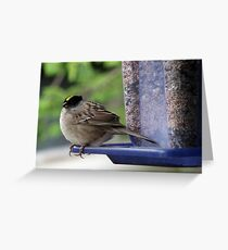 Wind-blown Golden-crowned Sparrow Greeting Card
