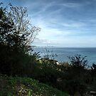 Garden View...............Lyme Regis. Dorset UK by lynn carter