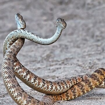 Dancing Rattlesnakes. 2 by alex4444