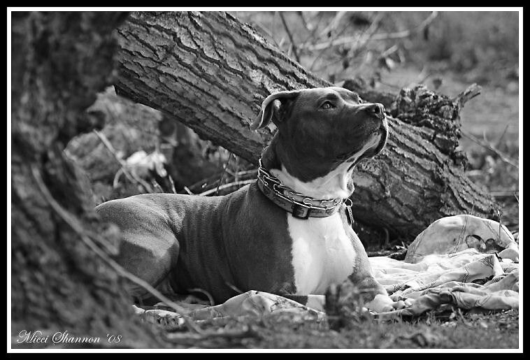 Bailey by Micci Shannon