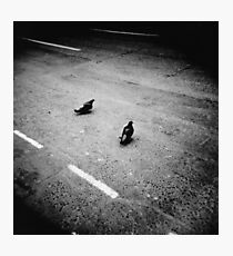 Lonely pigeons in London Photographic Print
