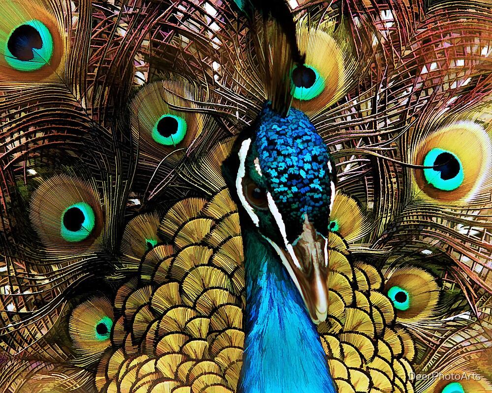 Peacock Pride by DeerPhotoArts