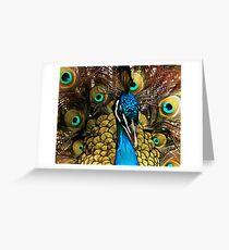 Peacock Pride Greeting Card