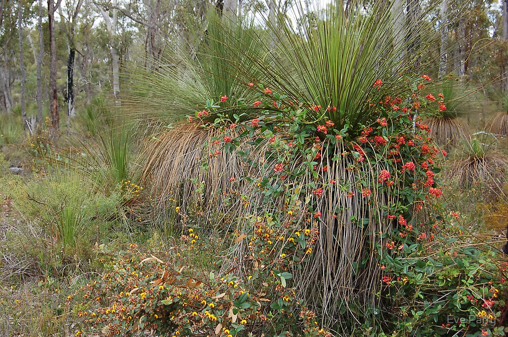 Nature's Decorators - Kennedia coccinea, Coral Vine by Eve Parry