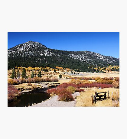 High Country Meadow Photographic Print