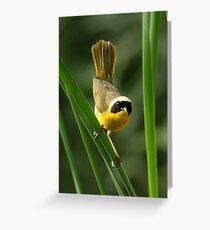 Warbler, Common Yellowthroat Greeting Card