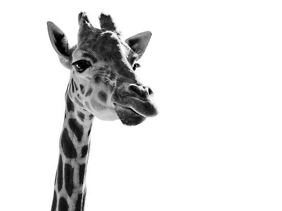 Giraffe Expressionism by SD Smart