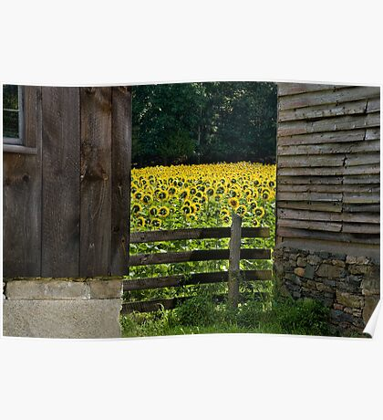 Between Two Barns Poster