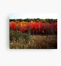 Autumn Impressionist  Canvas Print