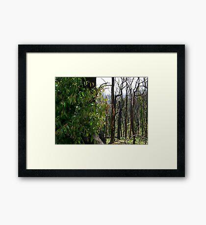 Regrowth Framed Print