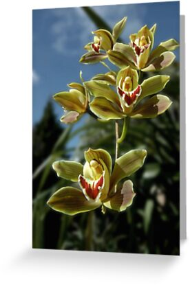 Orchids on Show by Steven  Agius