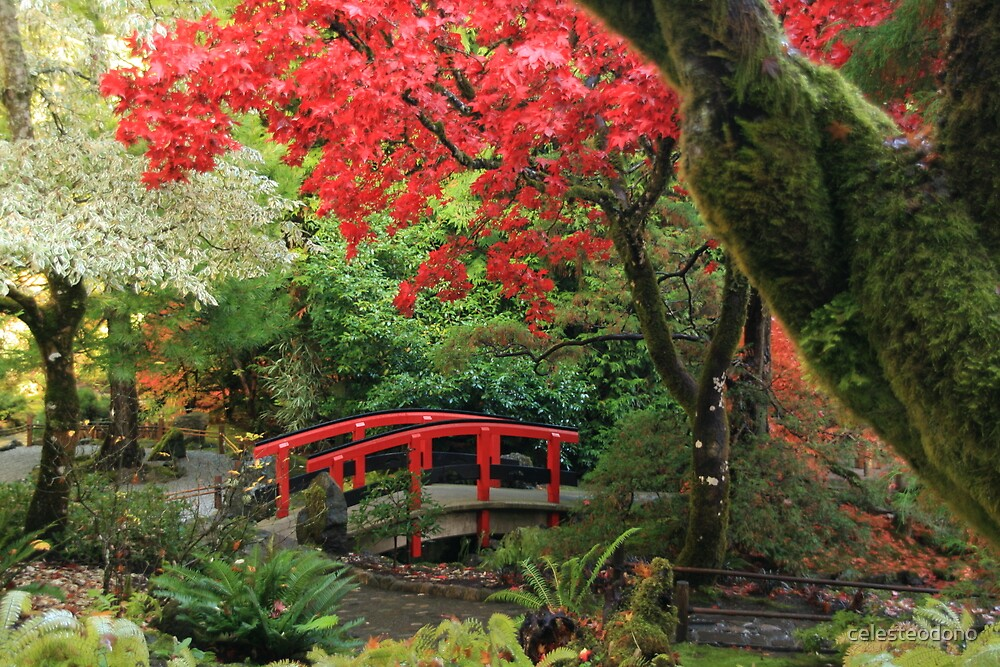 Fall Colours in the Japanese Garden by celesteodono
