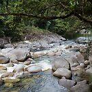 Mossman Gorge  by Karen Rich