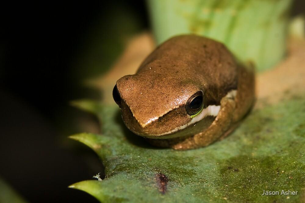 Froglet by Jason Asher