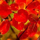 Autumn's Glow by Veikko  Suikkanen