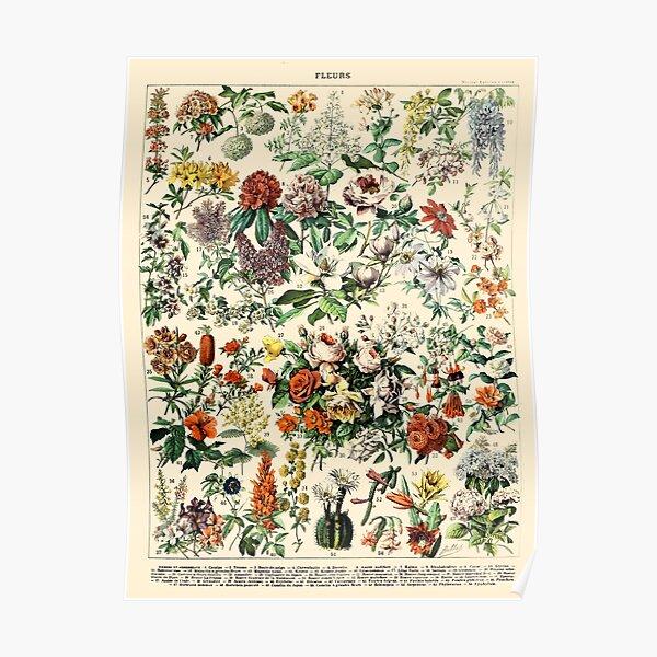 Vintage Botanical Wall Art Flower Poster Poster