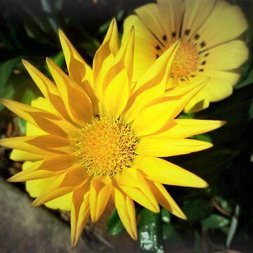 *Bright Spring Edging in Garden* by EdsMum