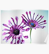 Whirligig daisies Poster