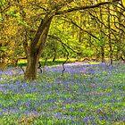 Oxford Blue by Viv Thompson